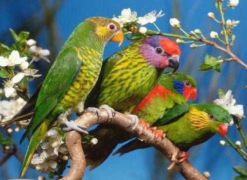 papugi,ipg